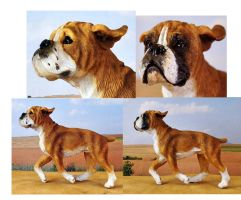 Customized Boxer Dog Figurine- Before and After by Tephra76