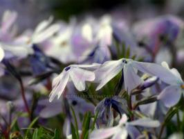 Soft spring colors by MDGallery