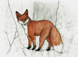 Fox by ParaIsBack