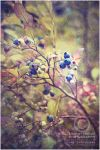 blue...berries by Finvara