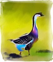 a Goose by fmr0