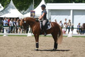 Dressage Competition Riding Stock by LuDa-Stock