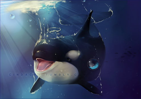 Orca Whale by Cindacry