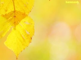 A Mellow Yellow Autumn by PhotographsByBri