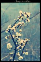 ... Spring is on its Way ... by JMckey