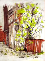Tree in the Alley 2 - Spring by Cabycab