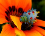 colourful critter by TylersAbsynce