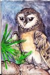 ACEO: Owl (for October) by PurpleWish23