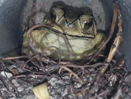 Toad 21Sep2014 by RiverKpocc