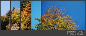Autumn Trees - stock images by orangedotgreen