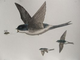 House Martin pursuing a vespid wasp by Oddity-1991