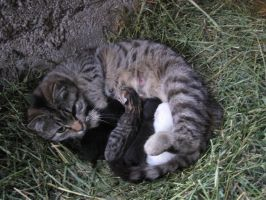 Mama Fachala and Kittens by ShockWaveX2