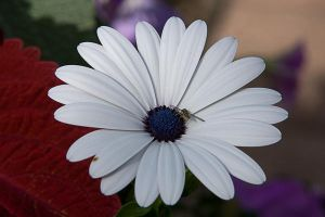Wild Flower with Bee by pubculture