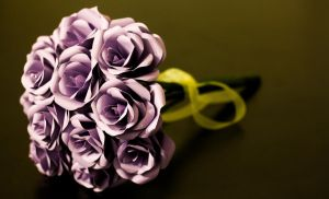 Paper Roses by Outspire