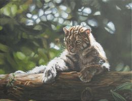 The fishing cat by Katie-Z