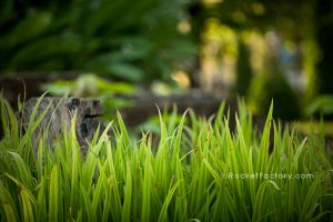 Abstract planting by frankrizzo