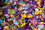 Leaves in water|Nature texture III by Chari-ot