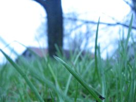 Grass by devPeter