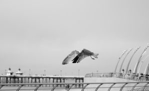 Blackpool Seagull by MagixianX