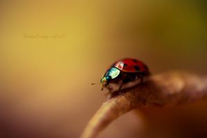 Coccinelle Rebelle by Somebody--else