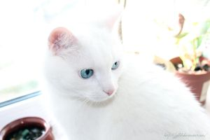 Blue Eyes by Jyllik
