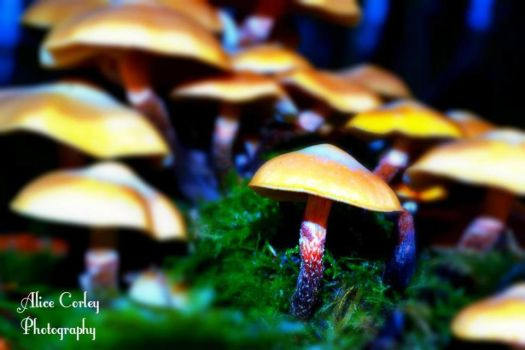 Magic Mushrooms by alicecorley