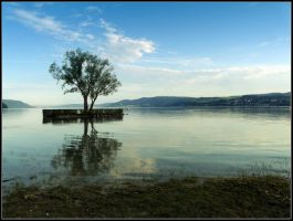 Tree on the Lake by kanes