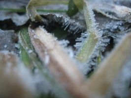 Frost on the grass by Tassola
