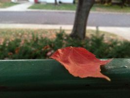 an autumn leaf by tolva