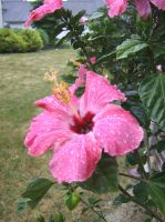 Rainy Dary Large Red Flower 3 by OsorrisStock