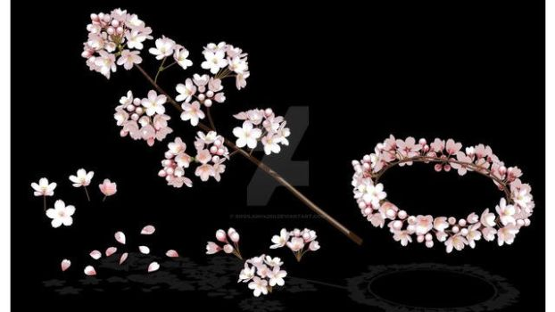 Sakura Flower Download by roosjuh14290