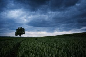 Wheat during storm by Tukotuko