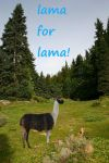 LAMA FOR LAMA by 123rusty345