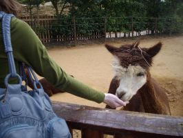Colchester Zoo photos 18 by pan77155