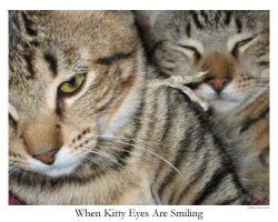 When Kitty Eyes Are Smiling by thebardsdotnet