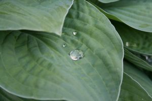 water drop and the leaf 3 by Aqua-Designs