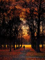 dimming in the park by AdrianaKH-75