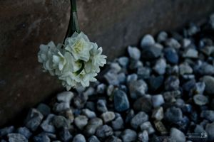 little bunch of petals by siren10101
