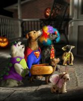 Trick or Doggy Treat by Shorra