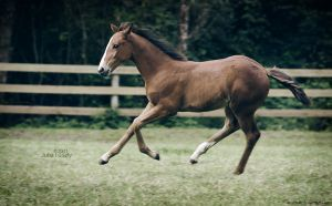 can't stop by equitate