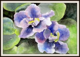 African Violet by ASD92