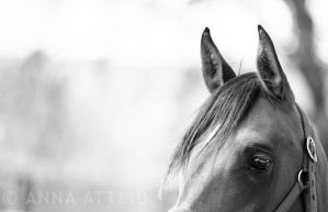 Pace by attlid