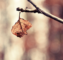 Last leaves... by MateuszPisarski