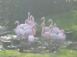Flamingos in the morning sun by GTURTLE123