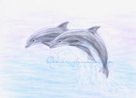 Dolphins by Embers