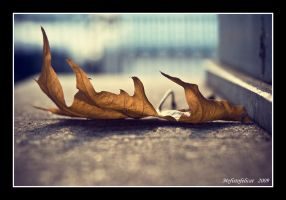 Still...leaf by Mefistofelicat