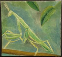 Praying Mantis by rrrawr