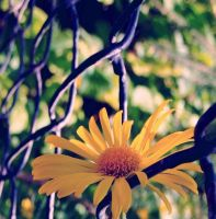 by the fence by sternenfern