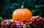 First Day of Fall by StephGabler