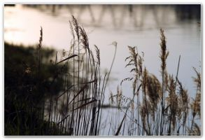 Down by the river 2 by zcikovac